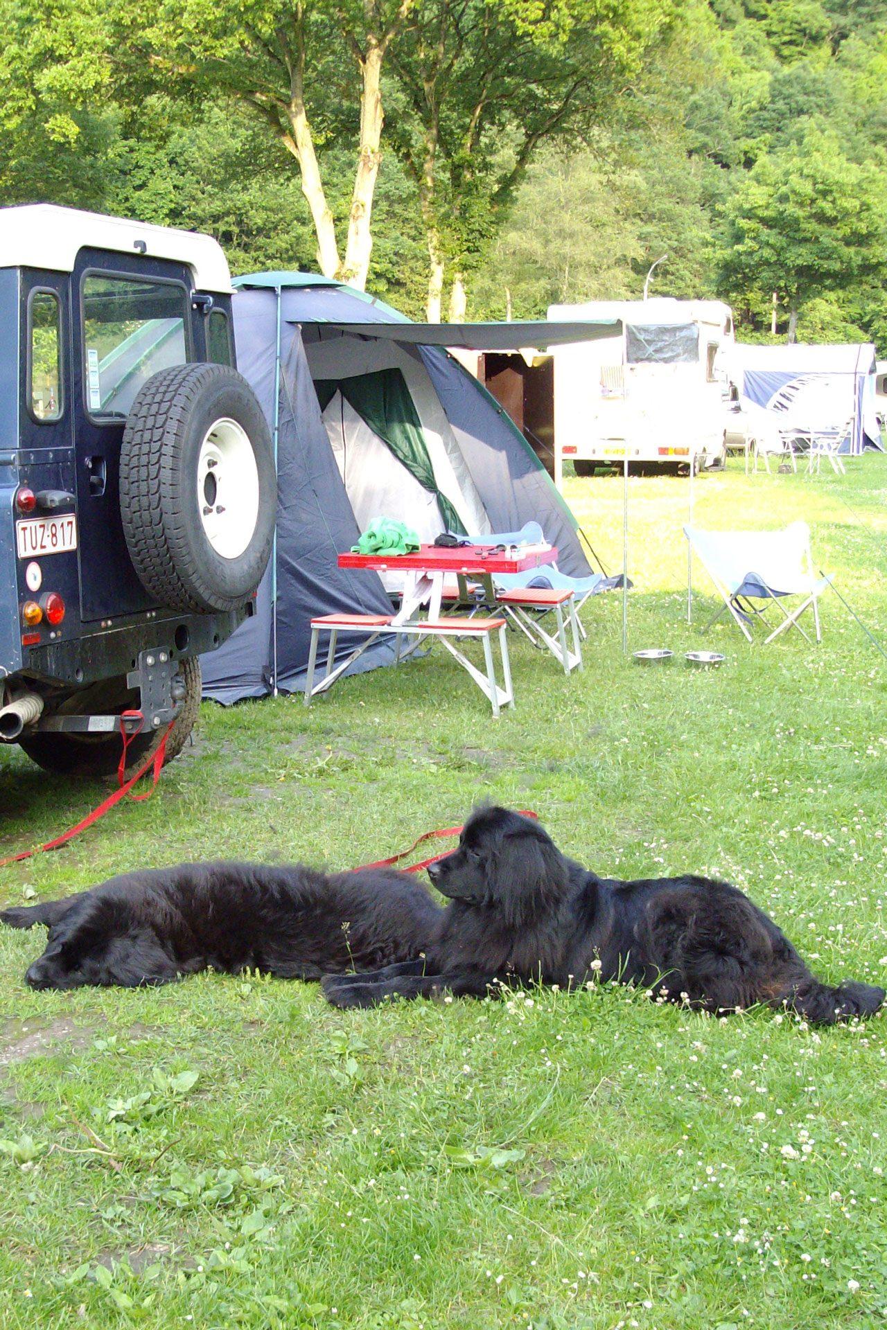 Hund - Camping Kautenbach