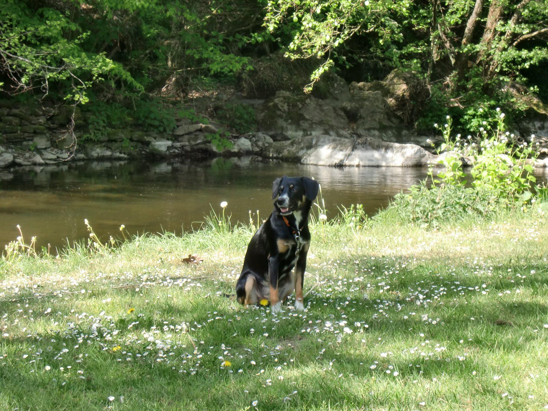 Dogs - Camping Kautenbach